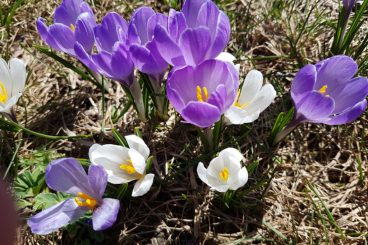 17 mars Printemps ou encore  l'hiver