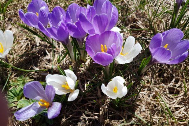 14 ou 15 mars selon l'hiver ou le printemps