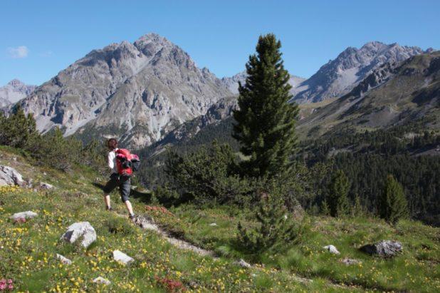 Parc National Suisse, Engadine 10 août au 15 août 2020
