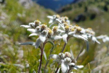 3 août au 8 août le Parc national suisse