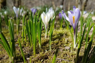 13 avril première du printemps