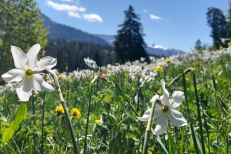 6 juin la traversée des Narcisses